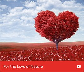 For the love of nature